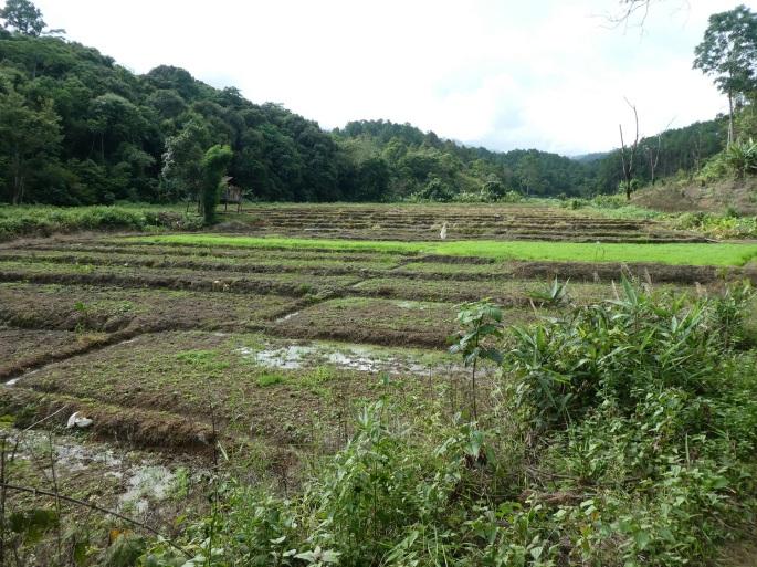Paddy fields in the hills near Ban Rak Thai