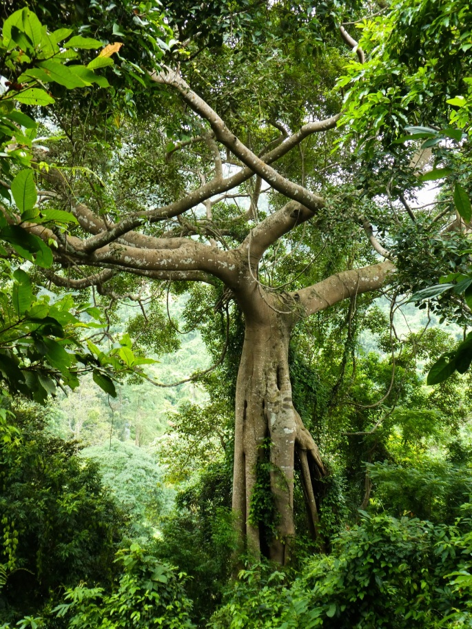 Kep Remarkable Tree