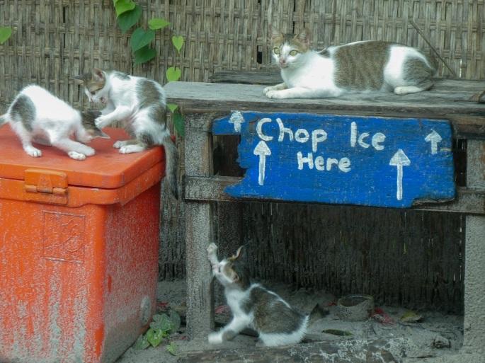 IS_Kittens