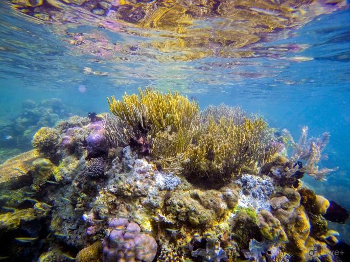 Komodo_Snorkelling_Reef.jpg